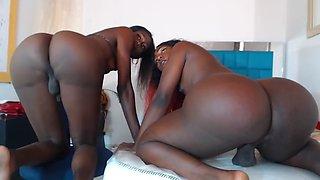 Big Booty Ebony TGirls 2