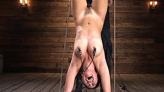 Oriental babe hogtied upside down and enjoys dildo in hairy pussy